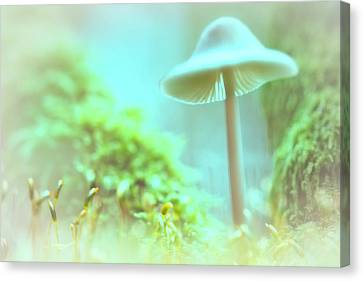 Canvas Print featuring the photograph Mushroom Misty Dreams, Mycena Galericulata by Dirk Ercken