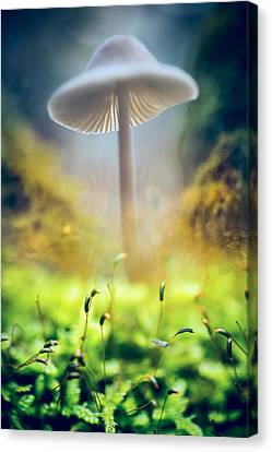 Mushroom Mycena Galericulata Canvas Print