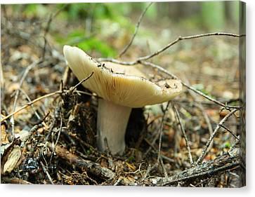Mushroom On Forest Floor Canvas Print by Jeff Swan