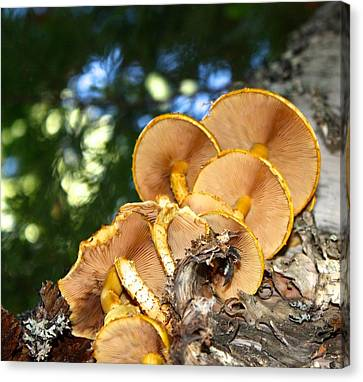 Mushroom Perspective Canvas Print by Brent Sisson