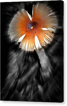 Mushroom Canvas Print by Rick DiGiammarino