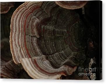 Canvas Print featuring the photograph Mushroom Shells by Kim Henderson