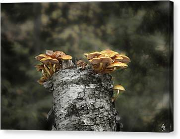 Mushrooms Atop Birch Canvas Print