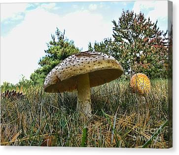 Mushrooms Canvas Print by Edward Sobuta