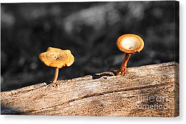 Mushrooms On A Branch Canvas Print by Donna Greene