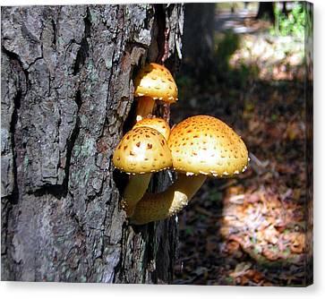 Mushrooms On A Tree Canvas Print by George Jones