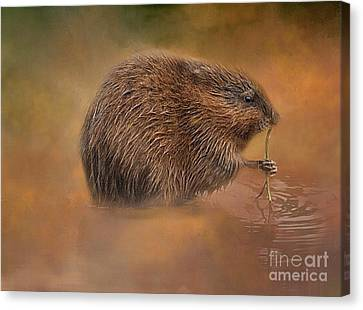 Muskrat Snack Canvas Print