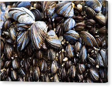 Canvas Print featuring the photograph Mussels by Justin Albrecht