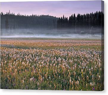 Musselshell Meadows Canvas Print by Leland D Howard