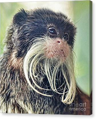 Mustache Monkey Watching His Friends At Play Canvas Print