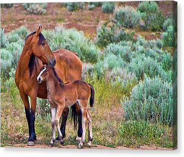 Mustang Horse And Foal Canvas Print