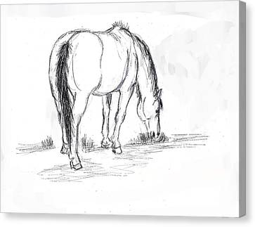 Mustang Mare Field Sketch Canvas Print by Dawn Senior-Trask