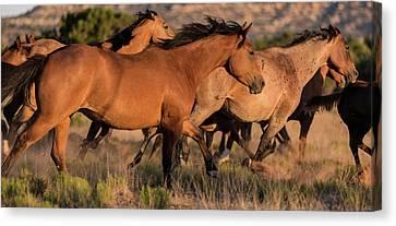 Mustang Run Canvas Print by Steve Gadomski