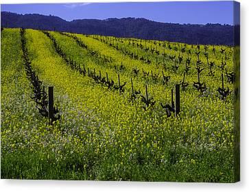 Mustard Grass Landscape Canvas Print