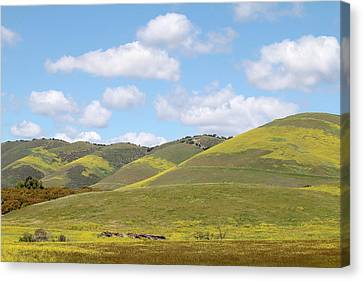 Mustard On Nipomo Hills Canvas Print by Art Block Collections