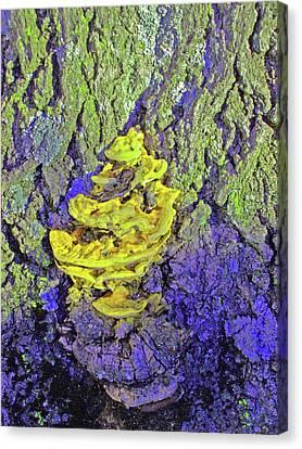 Mutated Fungi Canvas Print by Mary Ann Weger