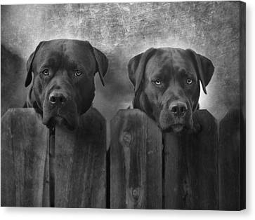 Labradors Canvas Print - Mutt And Jeff by Larry Marshall