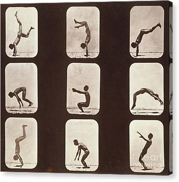 Disk Canvas Print - Muybridge Locomotion Back Hand Spring by Photo Researchers