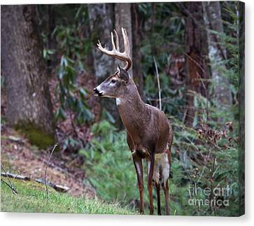 Canvas Print featuring the photograph My Best Side by Douglas Stucky