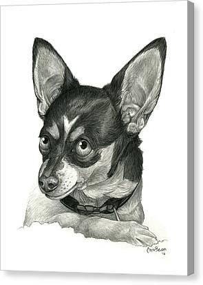 My Chihuahua Canvas Print by Cara Bevan