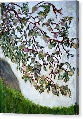 My Daughter's Apple Tree Canvas Print