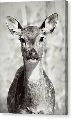 Canvas Print featuring the photograph My Dear by Jessica Brawley