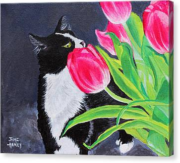 My Funny Valentine Canvas Print by Jaime Haney