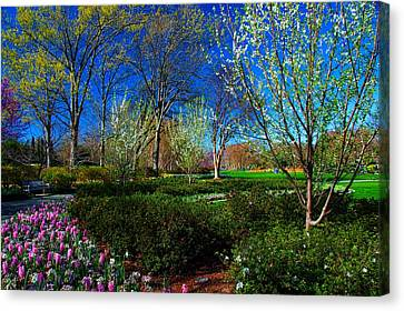 My Garden In Spring Canvas Print by Diana Mary Sharpton