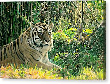My Hero Canvas Print by Diana Angstadt