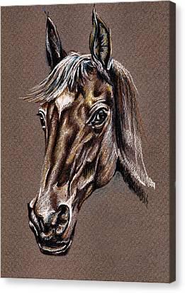 My Horse Portrait Canvas Print by Daliana Pacuraru