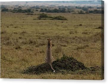 My Land , My World , My Africa Canvas Print