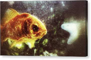 Canvas Print featuring the photograph My Littlest Fish by Isabella F Abbie Shores FRSA