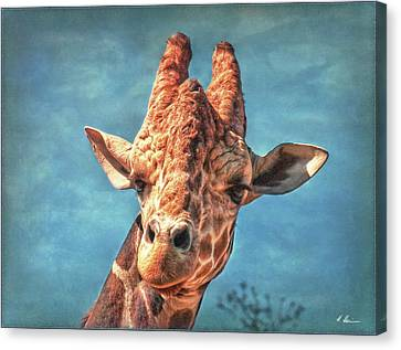 Canvas Print featuring the photograph My Name Is Bingwa by Hanny Heim