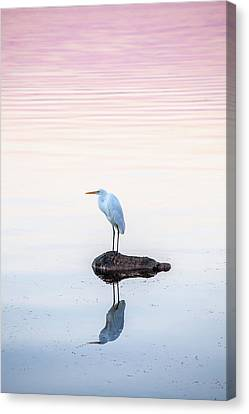 Pink Dawn Canvas Print - My Own Private Island by Az Jackson