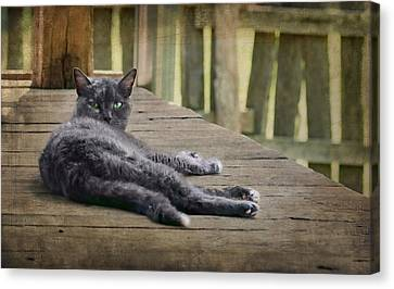 My Porch - Cat Canvas Print by Nikolyn McDonald