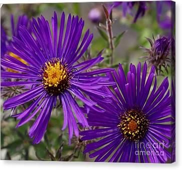 My Purple Ways Canvas Print by Debbie May