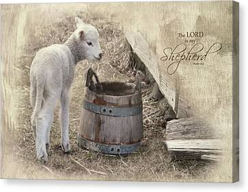 Canvas Print featuring the photograph My Shepherd by Robin-Lee Vieira