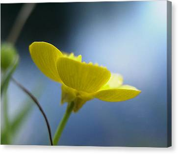 My Sweet Buttercup Canvas Print by Martha Ayotte