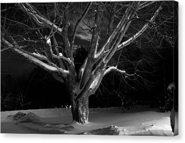 Canvas Print featuring the photograph My Tree by Greg DeBeck