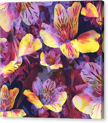 Mysterious Alstroemeria Canvas Print by Susanne Kasielke