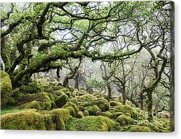 Mysterious Ancient Woodland Canvas Print by Tim Gainey