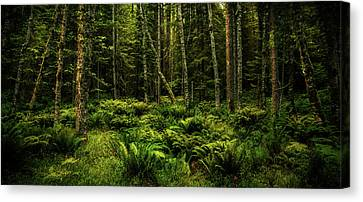 Mysterious Forest Canvas Print by TL Mair