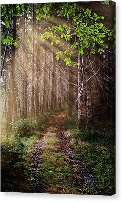 Canvas Print featuring the photograph Mystery At Dawn by Debra and Dave Vanderlaan