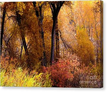 Mystery In Fall Folage Canvas Print