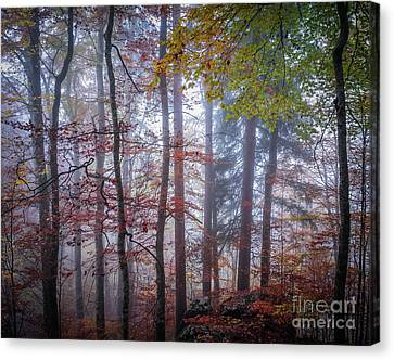 Canvas Print featuring the photograph Mystery In Fog by Elena Elisseeva