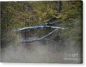 Canvas Print featuring the photograph Mystery In The Fall by Skip Willits