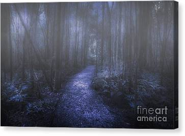 Mystery Pathway Canvas Print