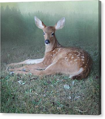 Canvas Print featuring the photograph Mystic Fawn by Sally Banfill