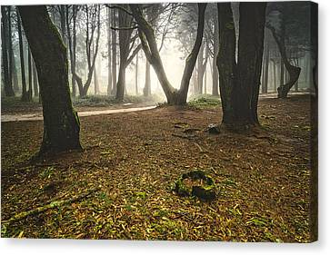 Mystic Forest I Canvas Print