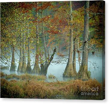 Canvas Print featuring the photograph Mystical Mist by Iris Greenwell